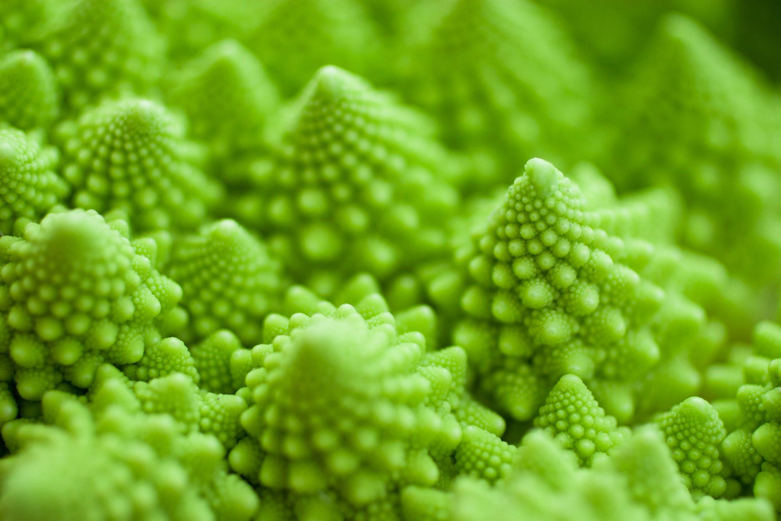 Fractal Broccoli Plant